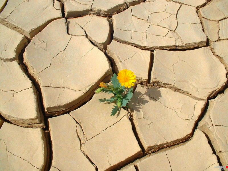 esperanza flor desierto