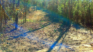 Photo: All trails are big enough to drive and lead to the creek surrounded by hardwoods.