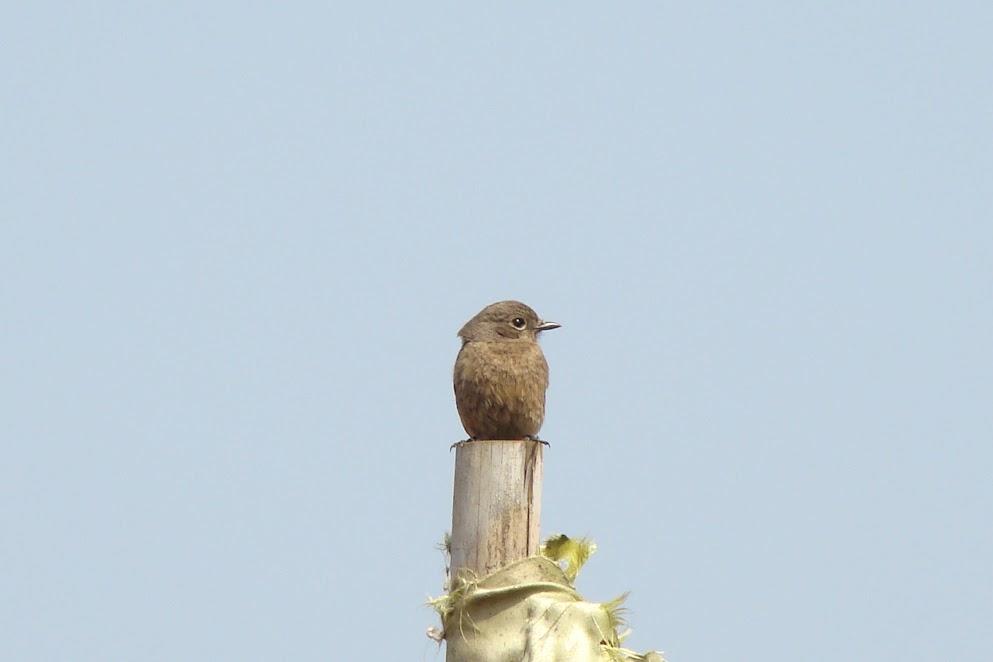 सह्याद्रीतील पक्षी