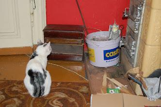 Photo: ...Prawdopodobnie kot był świadomy,co by się z nim stało,gdyby Gutek w jakiś sposób ucierpiał.Swoją drogą ciekawe,jak długo owe spotkanie trwało...:)