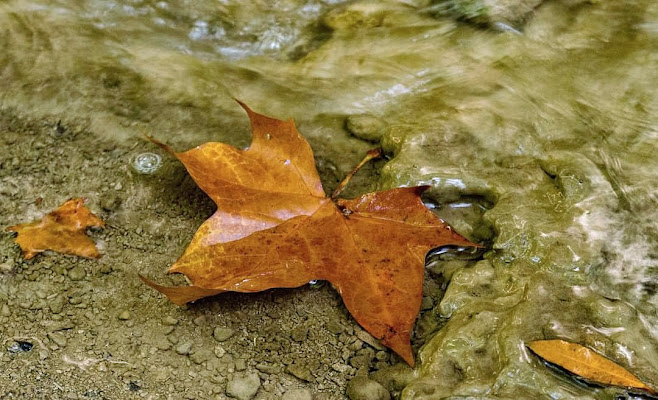 Come foglie di Tefnut_Simo