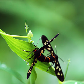 Insects by Sonali Majumder - Animals Insects & Spiders