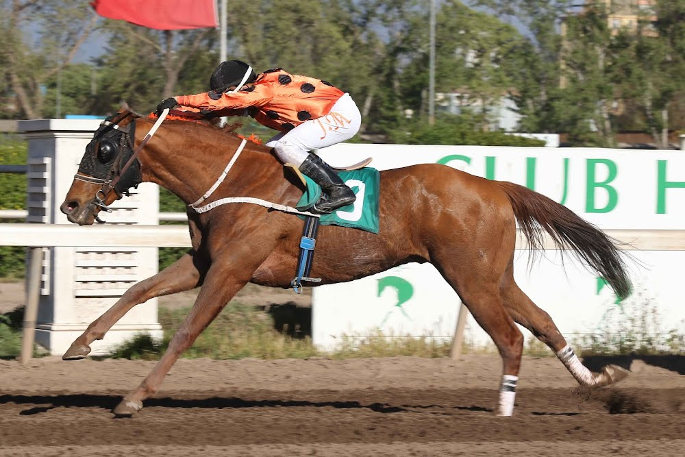 Parafernalico (Passion for Gold) gana Handicap (1300m-Arena-CHS).
