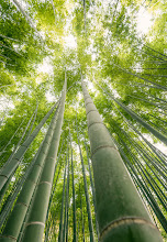 Photo: Where Earth Meets Sky  Took this the other day at Hokokuji in Kamakura. Was doing some family photos for friends before they return to the US, but couldn't resist grabbing some shots of the bamboo before we left. Lots of info on how I processed this image at my blog, so check it out!  http://lestaylorphoto.com/where-earth-meets-sky/  #japan #cooljapan #nikon #kamkura #travel