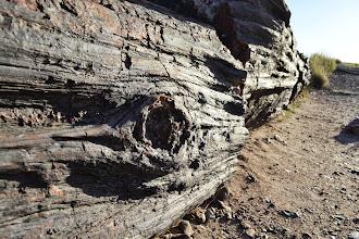 Photo: Petrified Log