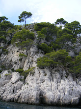 Photo: More of the aleppo pines, which are native to the Mediterranean region, and can be found from Morocco to Greece.