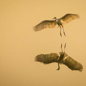 Reflection by Gaurav Madhopuri - Novices Only Wildlife ( water, bird, life, nature, fly, wildlife, air, egret, sun )