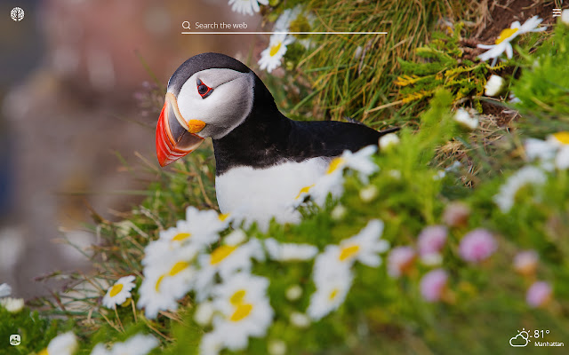 Puffin HD Wallpapers New Tab Theme