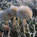 Frosty mushrooms