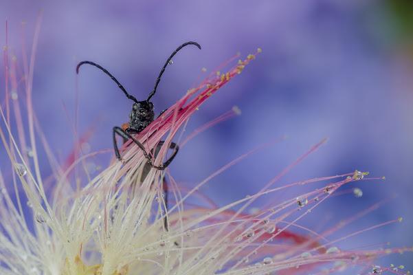 curious bug di Rickytre