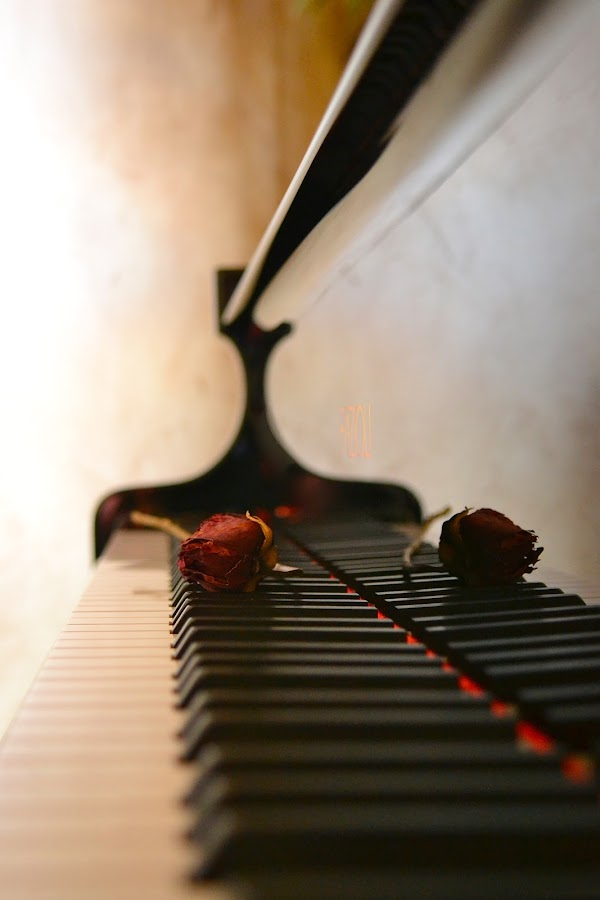 Ivory Reflection by Sandra Millsap - Artistic Objects Musical Instruments ( rose, keyboard, reflection, piano )