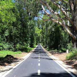 Tremelgo by Gil Reis - Transportation Roads ( life, bio, nature, forest, places, roads )