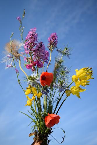 fiori estivi di irina sirbu