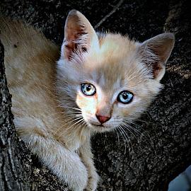 Blue Dots by Pieter J de Villiers - Animals - Cats Kittens