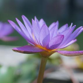 by Akshay Bhondokar - Nature Up Close Flowers - 2011-2013