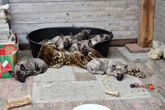 Photo: allemaal uitgeteld na het bezoek van die grote honden