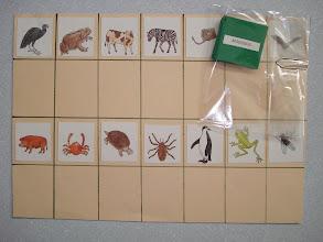 Photo: Cole na cartolina figuras de animais. Nas fichas estão os nomes dos animais, com as fichas nas mãos o aluno vai sobrepondo ao lado das figuras. Trabalhando a escrita da palavra, animais.