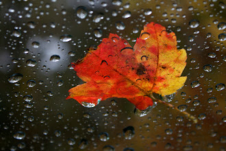Photo: #1 Leaf on my windshield.