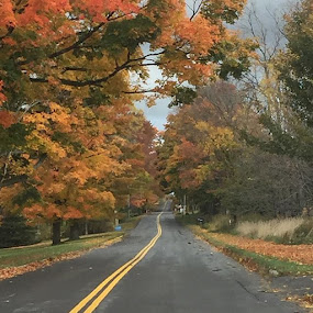 Fall days by Theresa Murray - Landscapes Travel ( fall, solitude, country road )