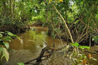 Photo: habitat