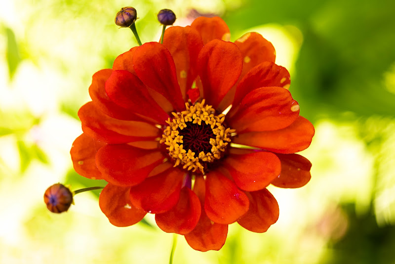 Fiore di Diego83