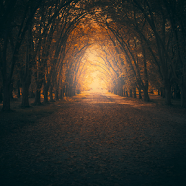 Path by Edi Libedinsky - Landscapes Forests ( path, fall, light, leaes, autumn, tunnel,  )