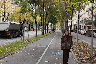 Photo: Tree-lined bicycle path.