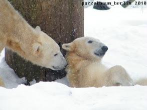 Photo: Knut fragt vorsichtig bei Gianna an ;-)