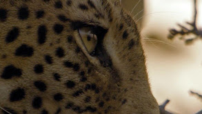 Leopard Rock thumbnail