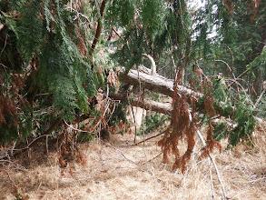 倒木をくぐる