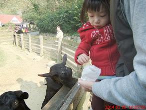 Photo: 餵羊