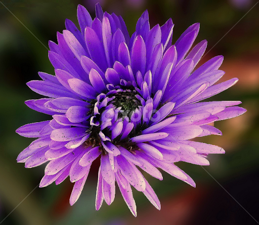 Violet Flower | Single Flower | Flowers | Pixoto