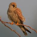 Spanish Birds Sounds icon