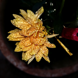 Flower in the Pot by Vivek Sharma - Instagram & Mobile Android ( vivekclix, flower photography, dew drops, nature, raindrops, flower up close, flower )