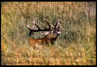 Photo: Wie der Hirsch schreiet nach frischem Wasser, so schreiet meine Seele, Gott, zu Dir. (Liedtext, Bibel, Psalm 42,2)