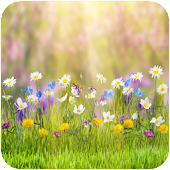 Spring Flower HD Wallpaper