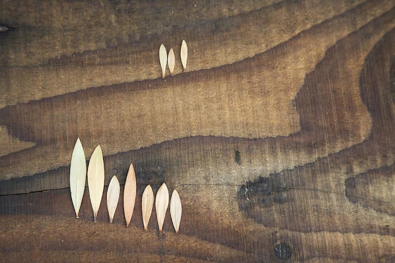 Colline senesi.......di legno di stefanogaleotti