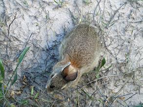 Photo: Bunny!
