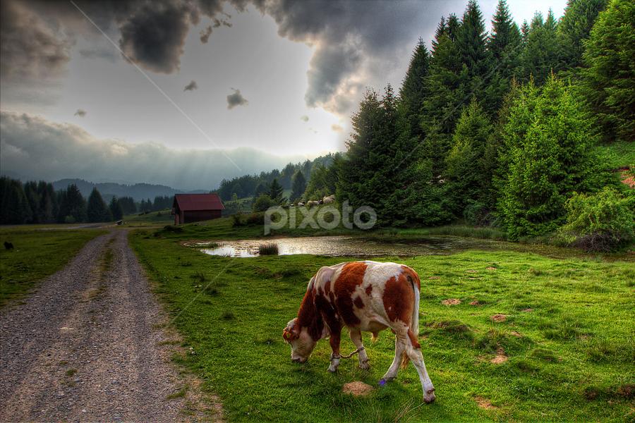 Storm is coming by Stanislav Horacek - Landscapes Prairies, Meadows & Fields