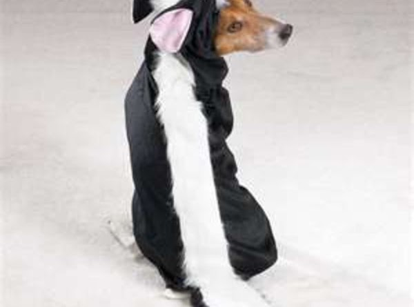 Pet Costumes At Halloween Recipe