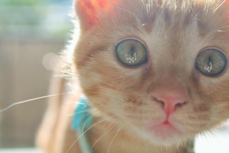 occhi di gatto di cla_bu