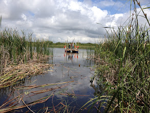 Photo: Clear path through the cat tails out into the pond at Cape Canaveral. Now the core is ready to be taken. Great pollen and diatom and foram preservation.  Environmental data should be great.
