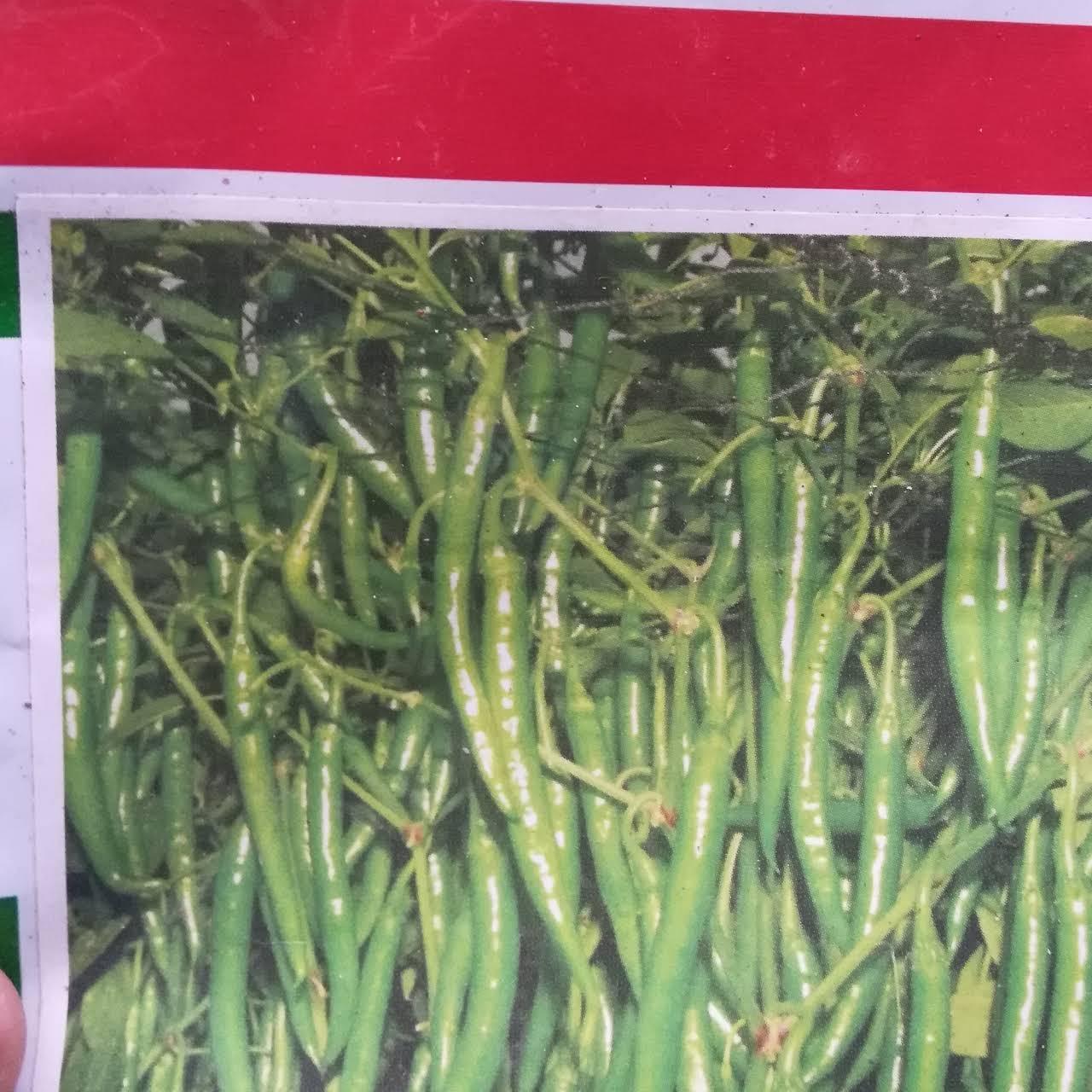 Madeshwara Nursery Farm - Wholesale vegetable and flower Plant