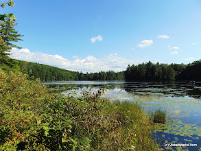 Photo: A summer view of  Half Moon Pond at Half Moon Pond State Park by Belinda Lafountain