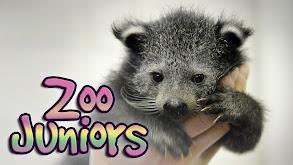 Zoo Juniors thumbnail