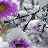 Snowy Purple Flower LWP Android APK Download Free By Daksh Apps