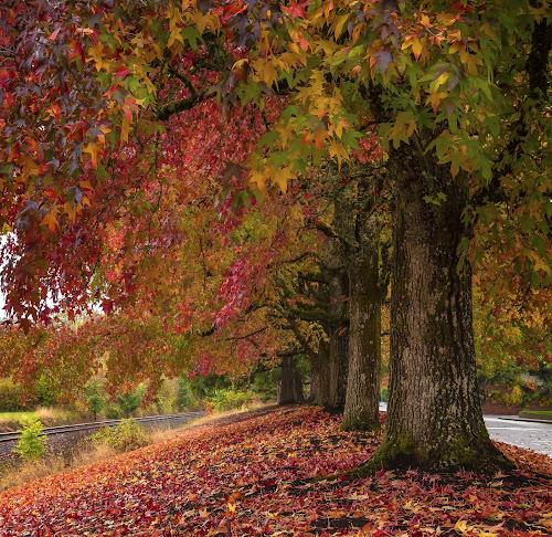 by Todd Klingler - Nature Up Close Trees & Bushes (  )