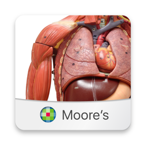 MOORE Anatomy Flashcards (app)