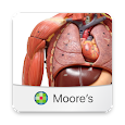 MOORE Anatomy Flashcards icon