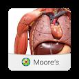 MOORE Anatomy Flashcards apk